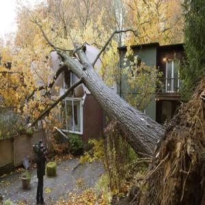 árvores caídas pelo furacão sandy